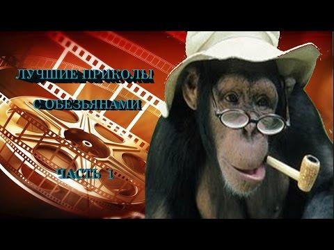 Прикольные фото обезьян. Прикольные картинки
