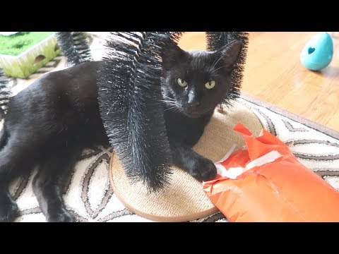 Boo Day 101 - The Cats Had A Halloween Party - The Lucky Ferals