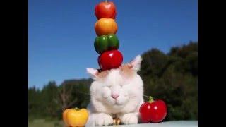 ТОП 5 популярных котов в интернете