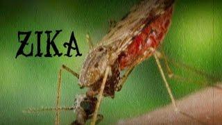 ماهو فيروس زيـكا ؟