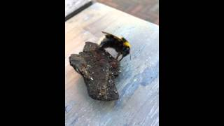 High5! Bumblebee