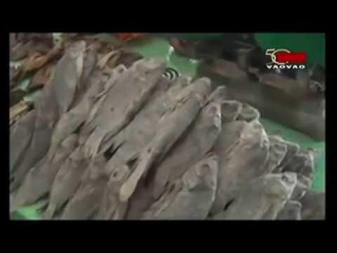 TVM-Foire Régionale sur les Ressources Halieutiques et de la Pêche Bongolava (01-12-2018)