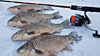 Наловили ОГРОМНЫХ КАРАСЕЙ НА СПИННИНГ Рыбалка 2020