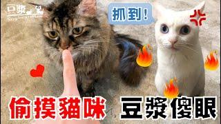 【豆漿 - SoybeanMilk】摸其他的貓 豆漿直接傻爆眼 ft.浪浪別哭