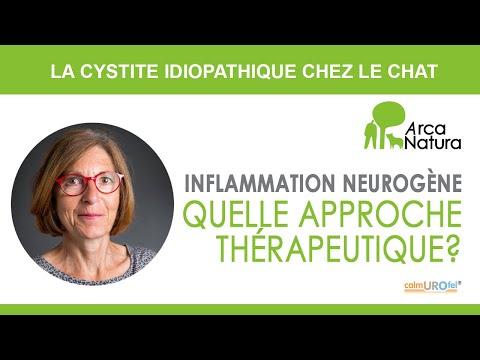 La Cystite Idiopathique Chez Le Chat - Inflammation Neurogène