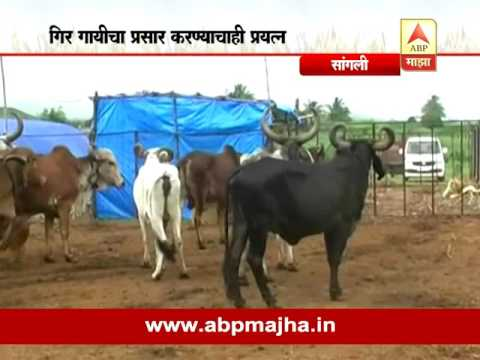 712: Kolhapur : Sangli : Gir Cow Conservation 03:08:2016