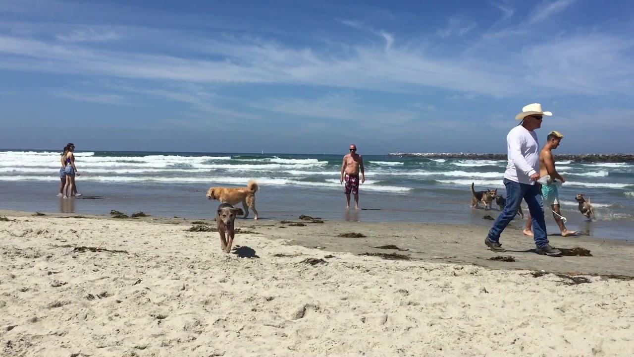 Ocean Beach Dog Park