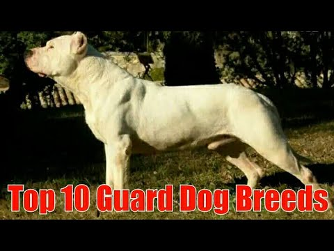 Top 10 Best Guard Dog Breeds