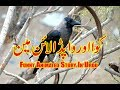 Thirsty Crow Funny Animated Story in Urdu