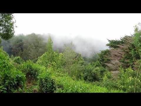 Maui   Poli Poli State Park   Boundary Trail