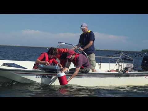 Shedding Light On The Effects Of Oyster Farming
