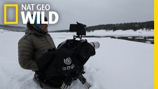 Behind the Scenes: Scouting for Otters | Wild Yellowstone