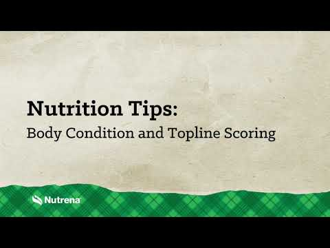 Nutrena Nutrition Tips: Body Condition And Topline Scoring Horses