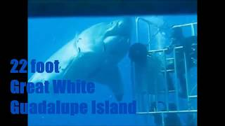 Deep Blue Great White Shark 22 feet over 2 tons July 4 2015