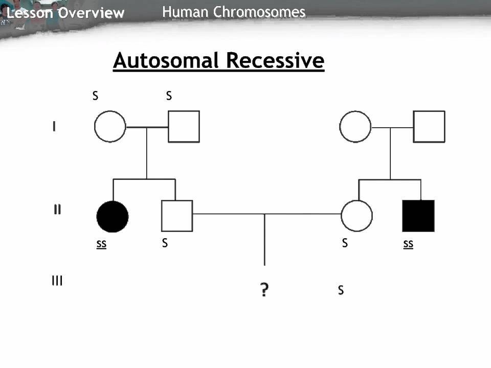 Autosomal recessiv stamtavle - Youtube-8823