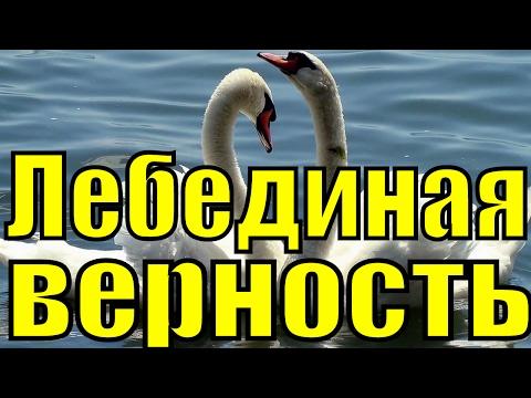 знакомства регистрации лебедине