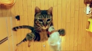 5 типов характеров кошек