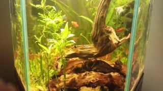 Hex Fish Tank Heavily Planted