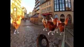 Les poulets de Janzé s