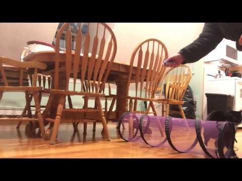 Cat training blooper video