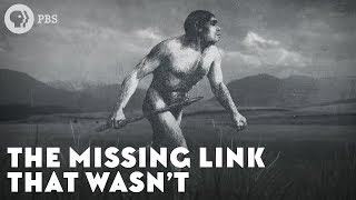 The Missing Link That Wasnt