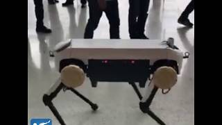 Four-legged robot that can withstand kicks exhibited at China robot summit