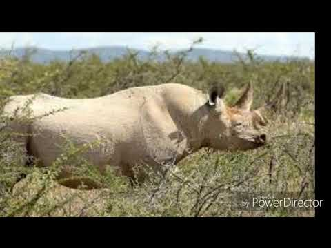 el-rinoceronte-audio-libro-parte-2