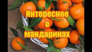 7 интересных фактов, которые нужно знать о мандаринах