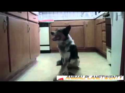Funny and Stupid Animals 2014
