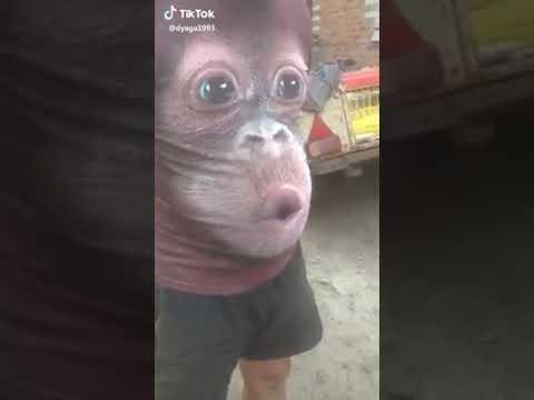 Men's T-Shirts 3D Printed Animal Monkey