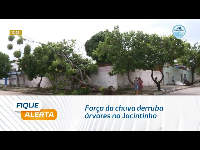 Força da chuva derruba árvores no Jacintinho