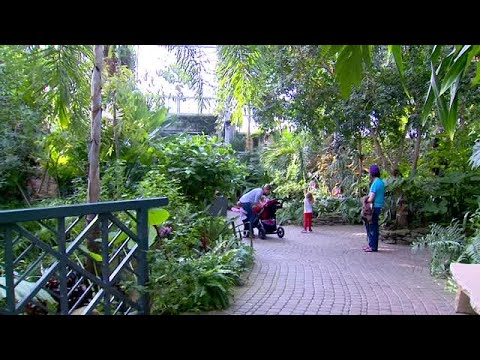 Butterflies Are Blooming at Meijer Gardens - YouTube