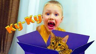 Играем в прятки с кошкой Hide and seek with cat