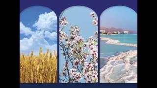 Пейзаж Святой Земли. Израиль – Украине .  Черкасский областной художественный музей