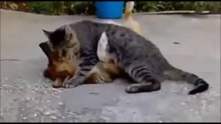 2016'nın En Komik Hayvanlar Videosu | İnsani Komedya