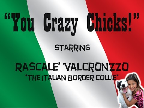 """You Crazy Chicks"" Starring Rascale' Valcronzzo The Italian Border Collie"