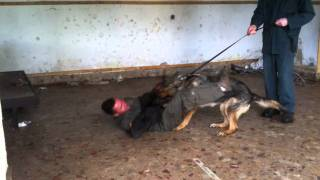 Green Dogs, Trained Dogs, Attack, Dogs, Search Dogs,dogs For Sale