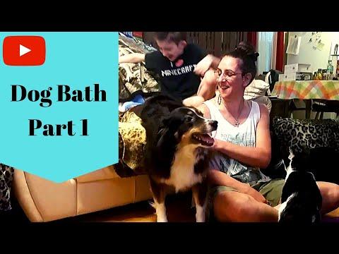 Dog Bathing - Part One