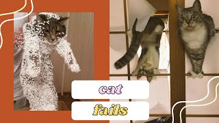 FUNNIEST CAT FAILS EVER TRY NOT TO LAUGH I COMPILATION