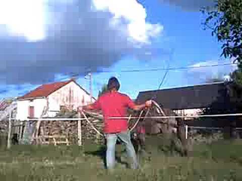 pirate la mule a la longe