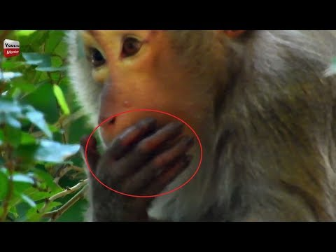 Ashly has more pregnant cost Achap Pop Pop but What happens to her hand Youlike Monkey 1935