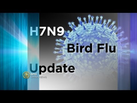 China News - Bird Flu Spreads, Region on Alert - NTD China News, April 4, 2013