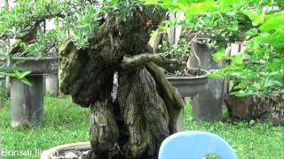 Video A Day in the Life of Bonsai Iligan: Large Tugas Forest Update download MP3, 3GP, MP4, WEBM, AVI, FLV November 2018