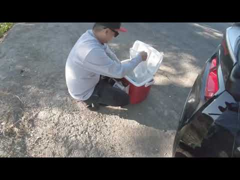 Bank Fishing The Old River Tracy Ca **new Fish Specie Was Caught** 09/19/19