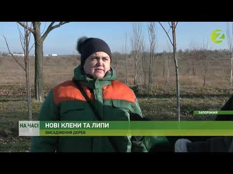 Телеканал Z: На часі - Комунальники висадили дерева біля Військового містечка дорогою в аеропорт - 11.12.2020
