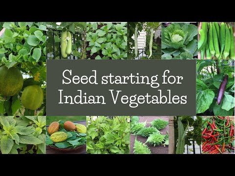 Starting Seeds for Indian Ethnic Vegetables/Greens in Colder Climates – Zone 6b.