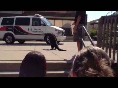 Lucy Bearcat real  aug 2012