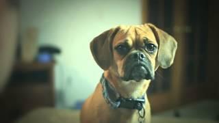 Aspca Launches National Fleet Of Puppy Interrogators