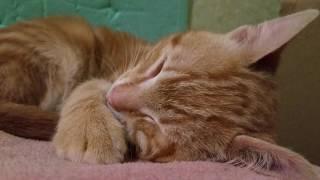 Кот дергается во сне 22.02.17