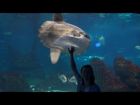L'aquarium Barcelona, part 4